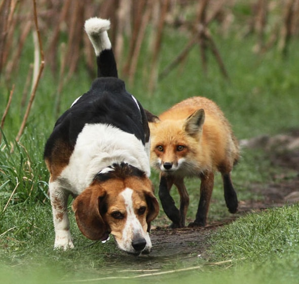 The World's Worst Hunting Dog