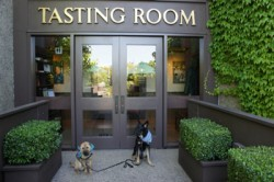 Wineries Welcome Dogs
