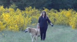 devoted dog owner pam ward