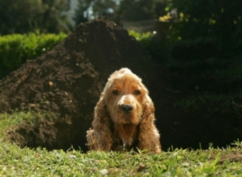 Dog Digging for a Bone Finds Bomb in Back Yard