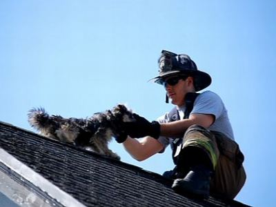 Firefighters Rescue Dog Trapped On Roof