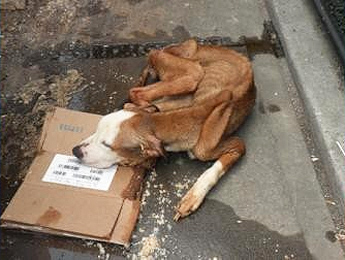 Emaciated Dog Found in NYC Dumpster