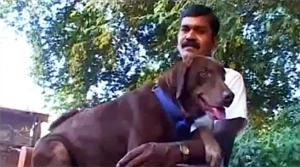 Minnu: India's Wonder Dog