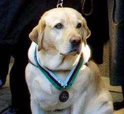 Death of an American Hero – Roselle The 9/11 Guide Dog