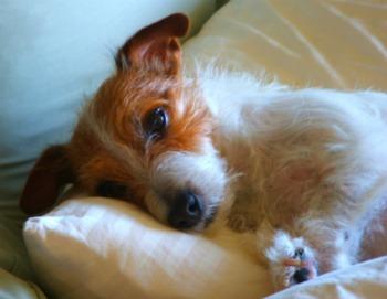 Pets – Sentient Beings or Mere Chattel?
