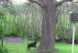 The Saturday Pet Blogger Hop: Squirrel Teases Dog