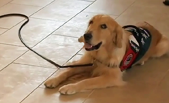 New VA PTSD Facility Hires Full Time Therapy Dog
