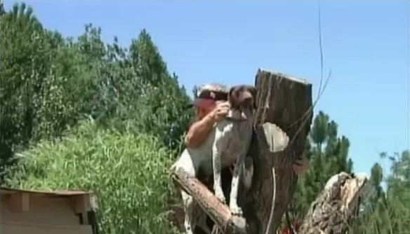 CO Firefighters Rescue Dog Stuck in Tree