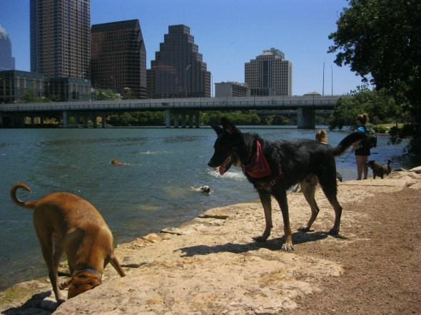 Buster on beach in Austin