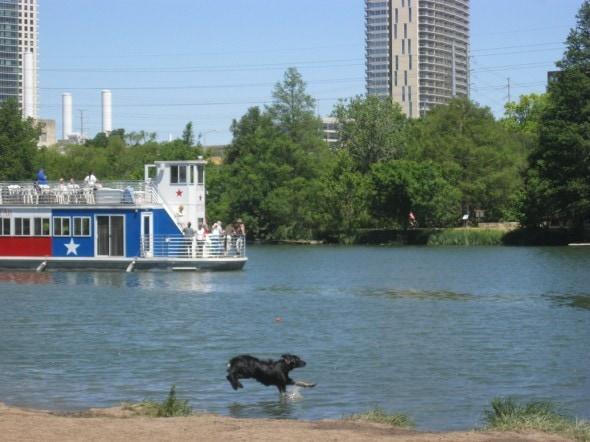 Dog Jumping in Ladybird Lake