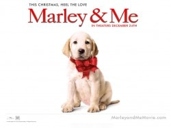 Marley_and_Me_Wallpaper_3_800