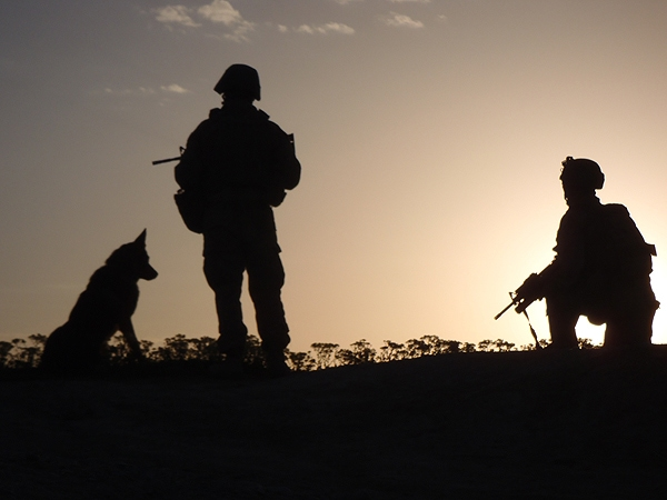 Military Working Dog Platoon Completes Afghanistan Tour