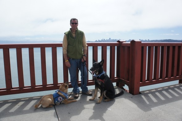 Dogs Take a Break On Golden Gate Bridge