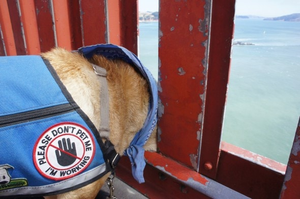 Ty on the Golden Gate Bridge