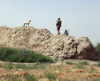 Guardian of Patrols: Afghan Dog Fights like Marine