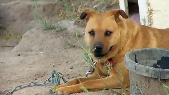 Dog Shot While Saving Kittens