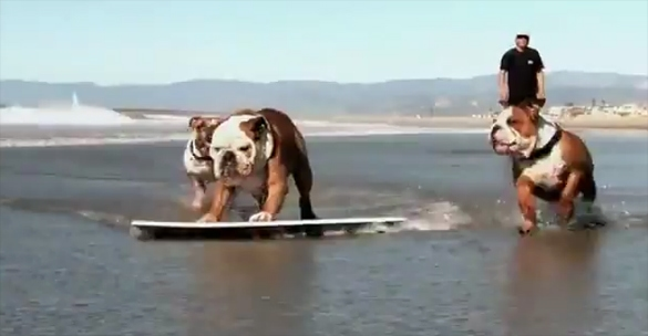 Boarding with Bulldogs