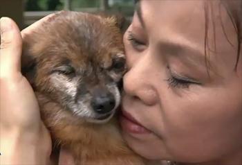 China's Animal Crusaders