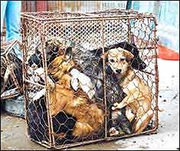 15,000 Dogs Slaughtered for Chinese Food Festival