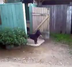 doorman dog