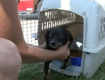 Woman Saves Dog, Family from Fire