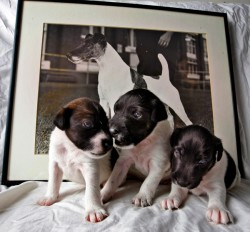 Terrier Litter Born from Sperm Frozen for 22 Years