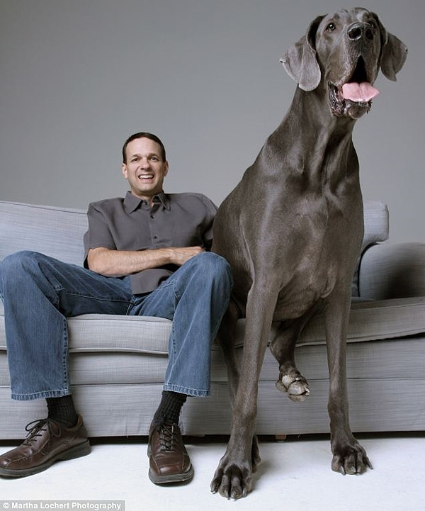 World's Biggest Dog Scores Book Deal