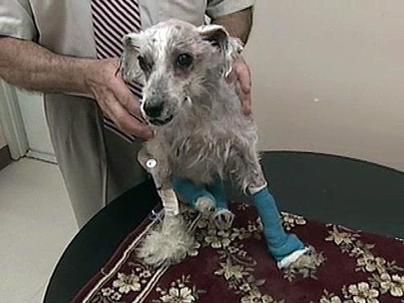 Emaciated Dog Found in Box at RISPCA