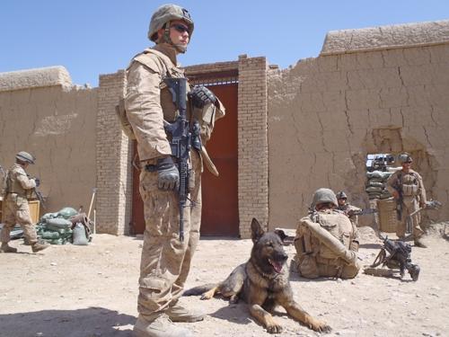 military dog handler