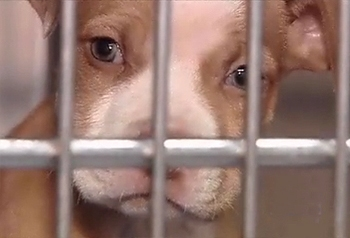 New Texas Law Protect Pets From Domestic Violence