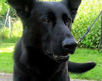 Rapist Busted by Sperm-sniffing Police Dog