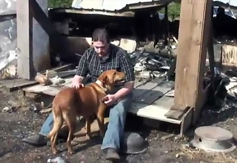 Rescued Dog Rescues Family