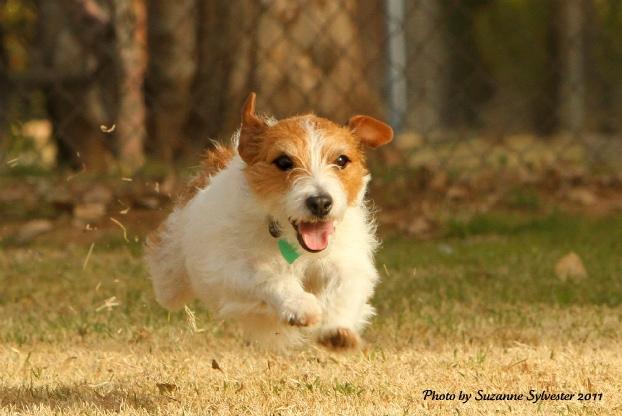 Pets: Sentient Beings Part 2