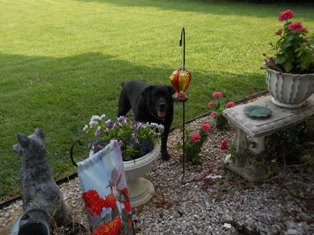 Talley lingers outside, wishing for one more flower to fly her way.