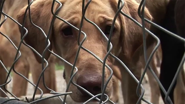 Dozens of Dogs Confiscated from Vermont Puppy Mill