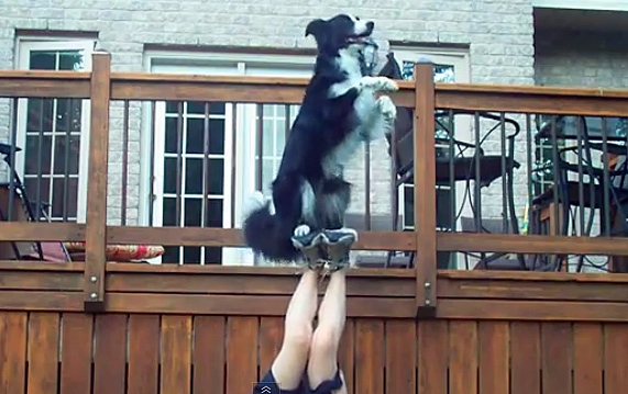 The Saturday Pet Blogger Hop: Amazing Funny Dog Tricks by Nana