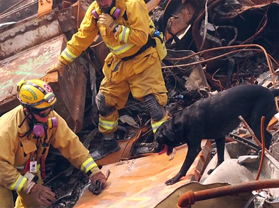 Before the Barks: 9/11 Search Dogs