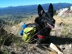Buster Hiking