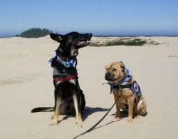 Dogs Dig Carmel-by-the-Sea