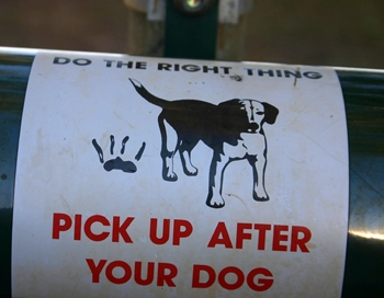 How To Stop Your Dog From Eating Poo