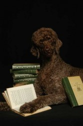 Miller Scholar