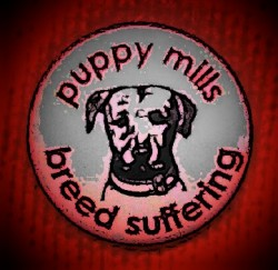 Puppy mills breed suffering