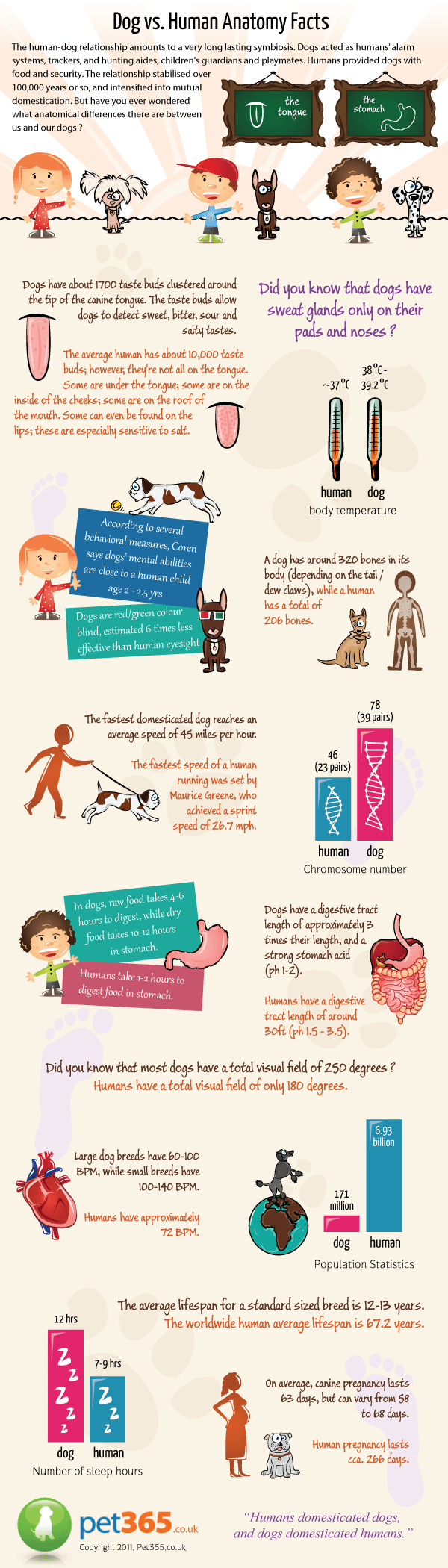 Dog vs. Human Anatomy Facts