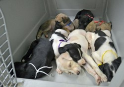 Hope for Faith: GALT Rescues Mother and Puppies