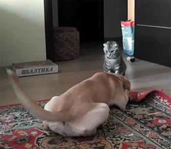 Dog vs. Karate Cat