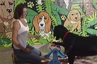 Mutt Makeover Saves Unruly Dog
