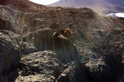 Mystery Dog Found Atop Africa's Highest Mountain
