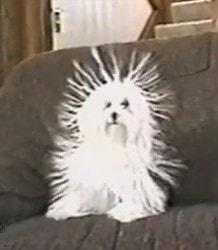 Static Dog