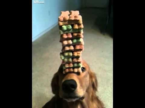 Jenga Dog