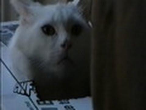 Cat-in-the-Box